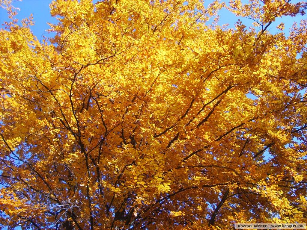 Los arboles y los colores del oto o for Arboles que no pierden sus hojas en otono