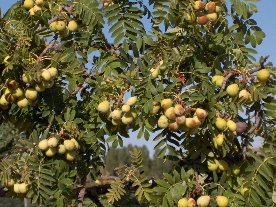 Rboles frutales de mi infancia - Cuando se plantan los arboles frutales ...